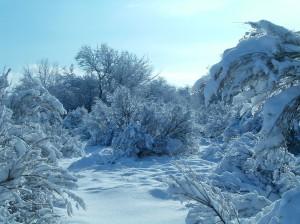 sage and snow